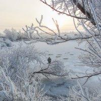 Мороз и солнце :: Наталья Ильина