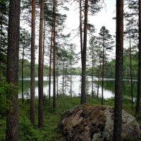 Национальный парк «Реповеси» :: Елена Павлова (Смолова)
