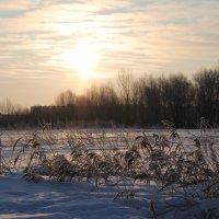 рассвет в парке :: Надежда Белорусова