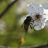весна пришла :: ...Настя ...