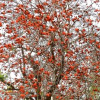 Коралловое дерево :: Аркадий Басович