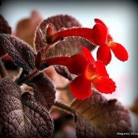цветы на подоконнике :: Олег Лукьянов