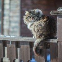 Местный обитатель острова Свияжск :: motiv-ekt Оборин Алексей