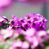 Розовый цветок :: Pavel Bredikhin