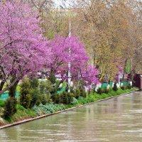 Весна пришла :: Mir-Tash