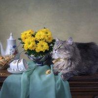 Печенье кошке? Это не серьезно! :: Ирина Приходько