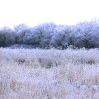 лес :: Ирина Миллер