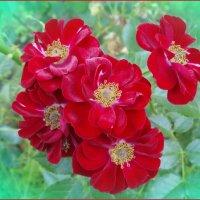 Букетик роз :: lady v.ekaterina