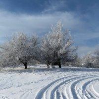 По первому снегу. :: Владимир Усачёв