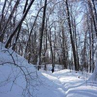Среди снегов :: Ольга