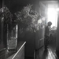 Солнечный свет, мальчик и мимоза :: Михаил Онипенко