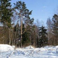 Картинка минувшей зимы :: Милешкин Владимир Алексеевич