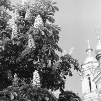 Киев 1962 май. :: Олег Афанасьевич Сергеев