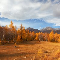 Осень золотая :: Анатолий Иргл