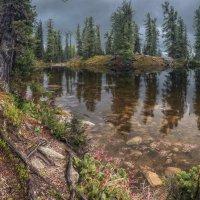 Кедры на Медвежьем озере :: Дамир Белоколенко