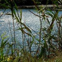 Серебро августа на пруду :: Лидия Бараблина