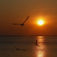 Провожая солнце :: Нилла Шарафан