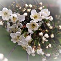 Весна :: Вячеслав Маслов