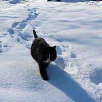 Снежными тропами :: Катя Бокова