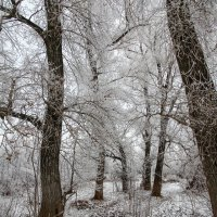 В лесу. :: Irina Polkova