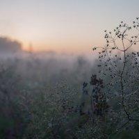 туманное утро :: Irina
