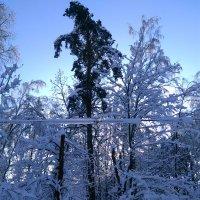 Поселок Клязьма. Зима 2018 :: Аlexandr Guru-Zhurzh
