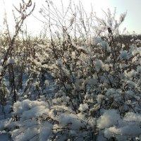 Первый снег :: Татьяна Назарова