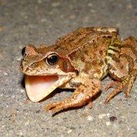 Лягушка с ловушкой :: SELENA4950