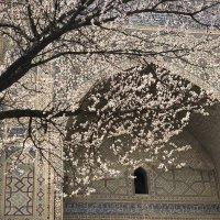 Восточная весна :: Ирина Бруй