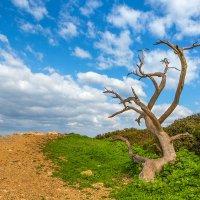 Дерево :: Наталья Заика