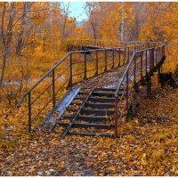 Вымостила осень листьями дорогу... :: Maxim Semenov