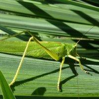 Зеленый на зеленом!... :: Лидия Бараблина