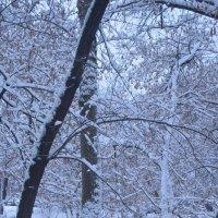 снег выпал только в январе... :: Галина R...