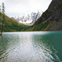 Шавлы, вдали ледник Орбита :: Галина Ильясова