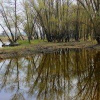 Отражение в воде. :: Валентина ツ ღ✿ღ