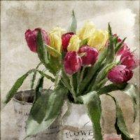 Тюльпаны :: Bosanat