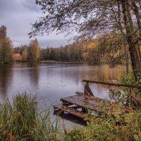 Моросит на пруду :: Владимир Макаров