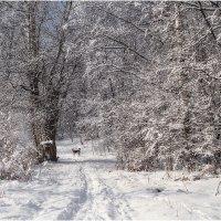 Зимний солнечный день :: Александр Максимов