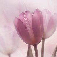 Сквозь весеннюю вуаль :: Lusi Almaz