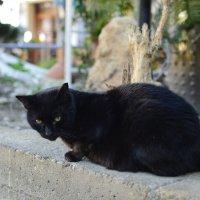 Черный кот :: Svetlana Erashchenkova