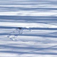 Тени на снегу! :: Жанна