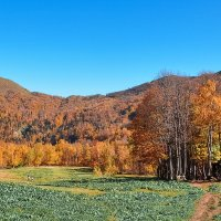 Абхазия - страна души. Осенние краски :: Мираслава Михоровская