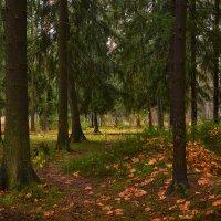 Лесными тропами :: Алексей (GraAl)
