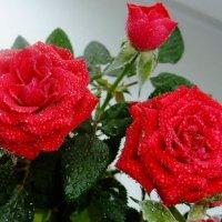 Любимые цветы :: Ольга Першина