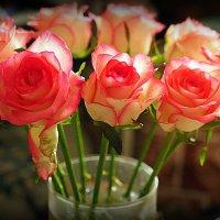 зимние розы для любимых :: Олег Лукьянов