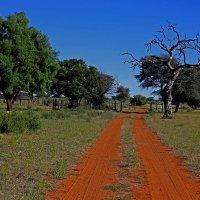 Африканский Пейзаж. :: Jakob Gardok