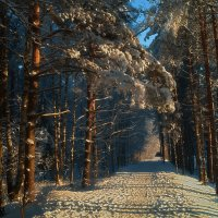 Лесная дорожка. :: Андрей Лобанов