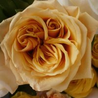 PRO розу ... :: Алёна Савина