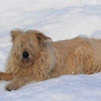 Старый, добрый пёс в ожидании хозянина, который кормит лебедей :: Маргарита Батырева