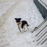 Собака :: Вера Аксёнова
